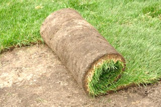 grass-sod-laying