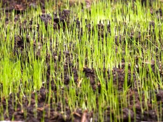 new-lawn-seed