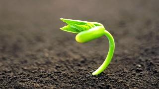 new-plant