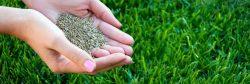 seeding-your-lawn